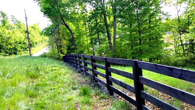 black board fence in a pasture near a road with tall trees