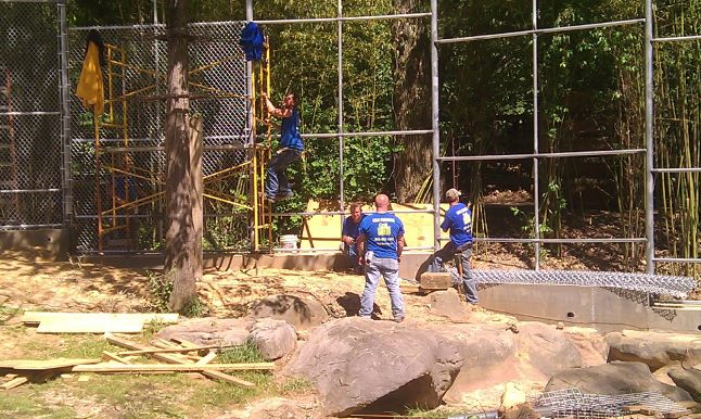 Knoxville Zoological Gardens.  workers watching man climbing scaffolding near a big tree and a tall fence. C&C Fencing Zoo Crew